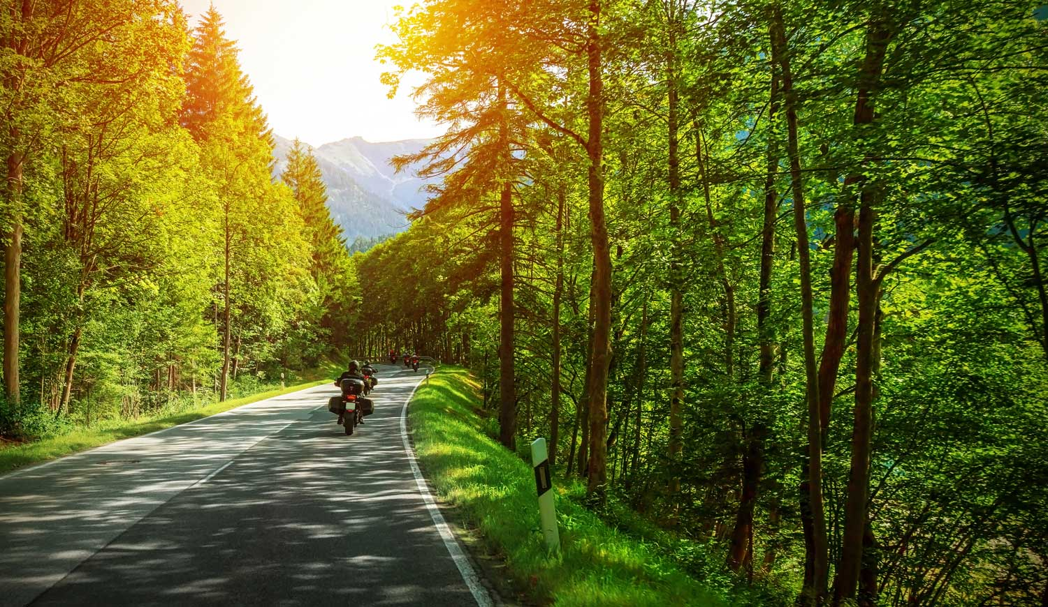Bikers on a road lined with trees